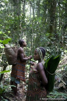 Tribal peoples are the best conservationists and guardians of the natural world. Survival's new report reveals how the world's biggest conservation organizations are implicated in their eviction from 'protected areas. Conservation, Wild Yam, Social Organization, Survival, Cognates, Early Humans, Family Relations, University College London, Human Evolution