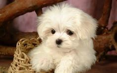 cute baby puppies - Bing Images
