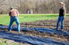 Laying down plastic mulch in garden beds