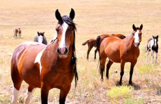 Cool photo of horse. Wild Mustangs, All The Pretty Horses, Horse Pictures, Wild Ones, Wild And Free, Wild Hearts, Zebras, Cool Photos, Animals