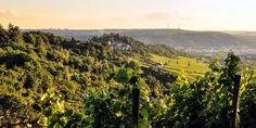 Württemberg - eine Präsentation des Weinanbaugebiets (2013) Vineyard, Outdoor, Wine, Round Round, Outdoors, Vine Yard, Vineyard Vines, Outdoor Games, The Great Outdoors