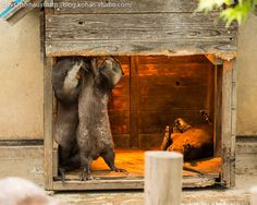 Otters Get to Fixing Up Their New Place Via Das Otterhaus