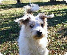 #NCAROLINA #URGENT ~ Maggie ID 6324765 is a 1.5yo friendly Terrier mix in need of a loving #adopter / #rescue at CRAVEN-PAMLICO ANIMAL SERVICES   1639 Old Airport Rd #NewBern NC 28562  animalcontrol@cravencounty.com