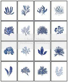 Seaweed Wall Art Print in Denim Blue - Blue Coral Art - Blue Seaweed Print - Sea Life Art Print - Coral Art Print - Seaweed V in Denim Arte Coral, Coral Art, Coral Blue, Blue Art, Blue And White, Paper Making Process, Sea Life Art, Ocean Life, Blue Accents