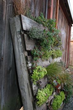 A few months back I stumbled across this awesome idea to turn a shipping pallet into a vertical planteron Fern Richardson's blog. Is Fern not the best name for a gardener? I'm secretly…