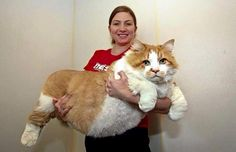 Huge cat with its owner