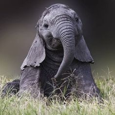 Image result for cute elephants tumblr