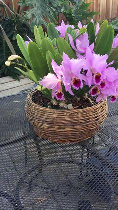 orchids for sale Orchids Garden, Orchid Plants, Purple Garden, Garden Plants, House Plants, Strange Flowers, Exotic Flowers, Amazing Flowers, Flower Farm