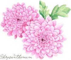 chrysanthemen-einfach-zeichnen-dekoking-com
