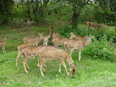 Sri Venkateshwara National Park in Andhra Pradesh, India