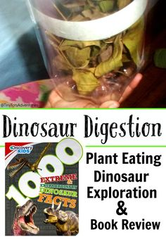 Explore a plant eating dinosaurs stomach and learn how long it takes to digest their food with this simple project.
