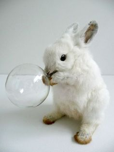Forever blowing bubbles: taxidermy bunny by Polly Morgan.
