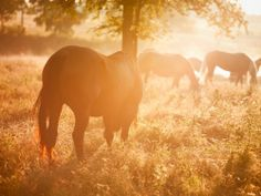 HORSES IN THE SUNSET!!! OMGOSH!!! BST FREAKING PIC ALMOST EVER!!!