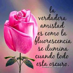 Discover recipes, home ideas, style inspiration and other ideas to try. Good Morning Good Night, Spanish Quotes, Videos Funny, Positive Thoughts, Love Quotes, Positivity, Flowers, Blog, Salvador