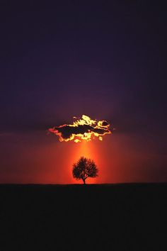 "Every time I saw pictures of lone trees against the horizon,I think of ""The Ring"",and it creeps me out a bit."