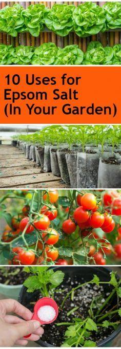 uses for epsom salt, epsom salt, epsom salt in the garden, gardening tips, popular gardening ideas, gardening, gardening hacks