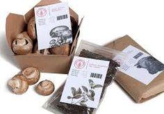 Image result for mushroom packaging