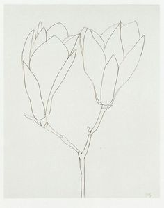 Floral Line Drawing botanical illustration Ellsworth Kelly, Plant Drawing, Painting & Drawing, Illustration Botanique, Illustration Art, Art Postal, Simple Line Drawings, No Rain, You Draw