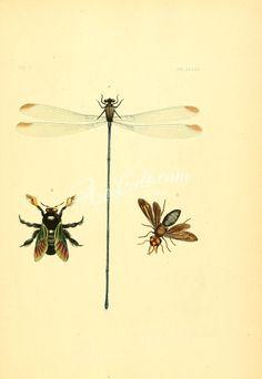 003-Lepidoptera, Hemiptera      ...