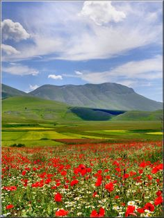 Between Umbria and Le Marche regions in Italy, throughout the end of May and the month of June the most amazing flowers paint the Piana di Castelluccio and surrounding plains.  It's an amazing sight!