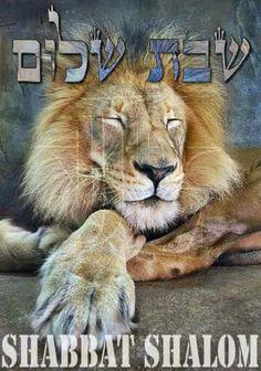 Sabbath Peace...