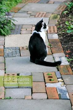 Cat sitting on cottage garden style path made from salvaged materials garden paving Easy Garden Design Ideas You Can Do Yourself Garden Paving, Garden Paths, Fenced Garden, Recycled Brick, Brick Path, Paving Ideas, Cat Sitting, Plant Pictures, Easy Garden