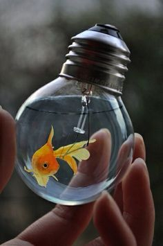 Fish in another lightbulb