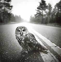 your intuition, watch for the signs  Arthur Tress