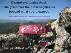 Heart Dog: Surviving the Loss of Your Canine Soul Mate Memorial Ideas, Dog Memorial, Pet Loss, Survival, Snoopy, Angel, Amazon, Pets, Random