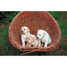 Labrador retriever  Labradors are known for being the best of all water retrievers. They can swim for hours in cold water and have such a remarkable nose and mouth that they are able to retrieve fallen fowl from great distances without damaging the bird.