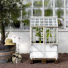 Window Greenhouse, Shed To Tiny House, Potting Sheds, Old Windows, Green Rooms, Architectural Salvage, Glass House, Garden Inspiration, Garden Plants