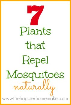 7 Plants that Repel Mosquitoes - The Happier Homemaker