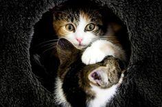 Katten in dierenasiel