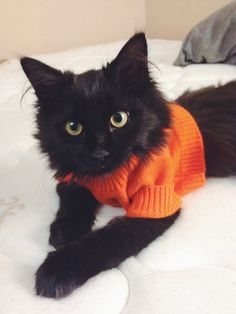 ..., I put a sweater on my kitty today. She looks like...