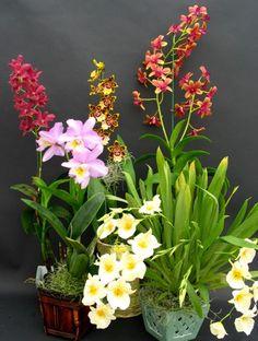 a nice orchid arrangement