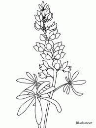 bluebonnet outline - Google Search