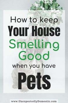 How to keep your house smelling good all the time naturally! These amazing fresh smelling home tips & hacks will work even with pets. Get rid of bad smells with or without air freshener and home fragrance. There are ways to cleanses the air and cleaning tips with essential oils, baking soda and other DIY tips. How to make your house smell good for the holidays, even with dogs. #cleaninghacks #cleaningtips #cleaningtricls #smellgood #homehacks #unexpectedlydomestic #homefragrances