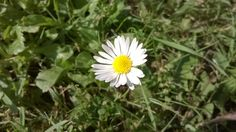 Beatiful flower on the grass./Nádherný kvet na trávniku.