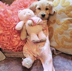 Dog Breeds Little .Dog Breeds Little Super Cute Puppies, Cute Little Puppies, Cute Dogs And Puppies, Cute Little Animals, Cute Funny Animals, Doggies, Funny Dogs, So Cute Baby, Cute Baby Dogs