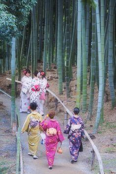 Kyoto Todaiji(temple) bamboo path