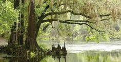 Les marais des Everglades James Grippando situe son histoire dans les Everglades…