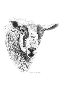 Ink Drawing Art Illustration Print Traditional Art by caitlihne, $18.00