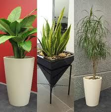 decorating with mother in law tongue plant - Google Search
