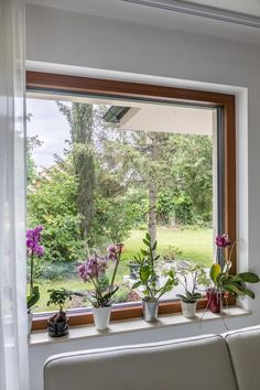 Colorful Orchids in front of Janko Window Orchids, Beautiful Flowers, Windows, Colorful, Pretty, Plants, Home, Ad Home, Plant