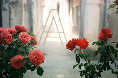 rose barge: http://fathomaway.com/guides/europe/italy/itineraries/amanda-marsalis-venice-italy/#