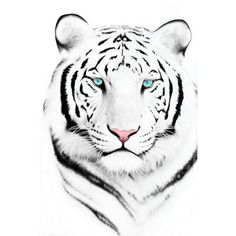 white tiger image, picture by leighleigh13_2007 - Photobucket ❤ liked on Polyvore