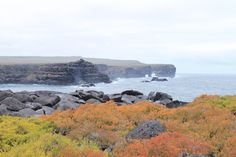 Flora auf Española | Galapagos Reise  solecu.de/Galapagos.htm
