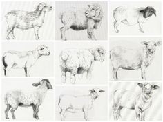 23 pencil drawings on canvas as part of commission from 'The Dolphin' - an art boutique hotel (Southampton, UK) for a bedroom I called 'Lullaby/Counting Sheep'. (The bed was set beneath an arch, on the underside of which the sheep were placed, walking in a line from one side of the bed to the other.)