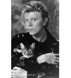 David Bowie ♥s kitty