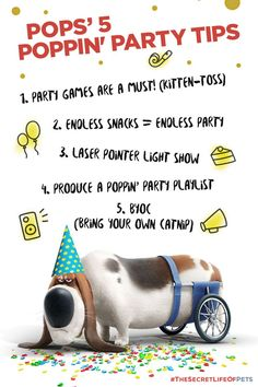 The Secret Life Of Pets - Funny Pictures And Quotes 013 Cat Birthday, Animal Birthday, Third Birthday, Birthday Ideas, Funny Picture Quotes, Funny Pictures, Funny Pics, Popular Movie Quotes, Pets Movie
